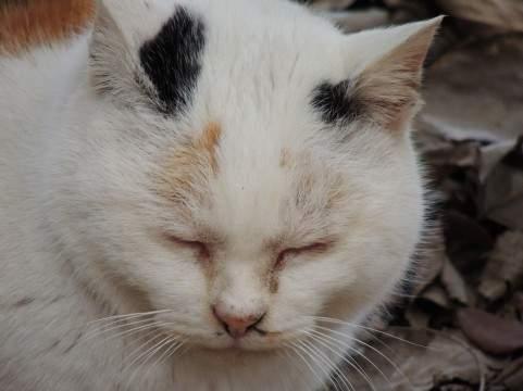 「わかっておる。。」老いた猫