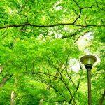 木々と街灯
