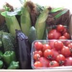 新鮮野菜をお届け