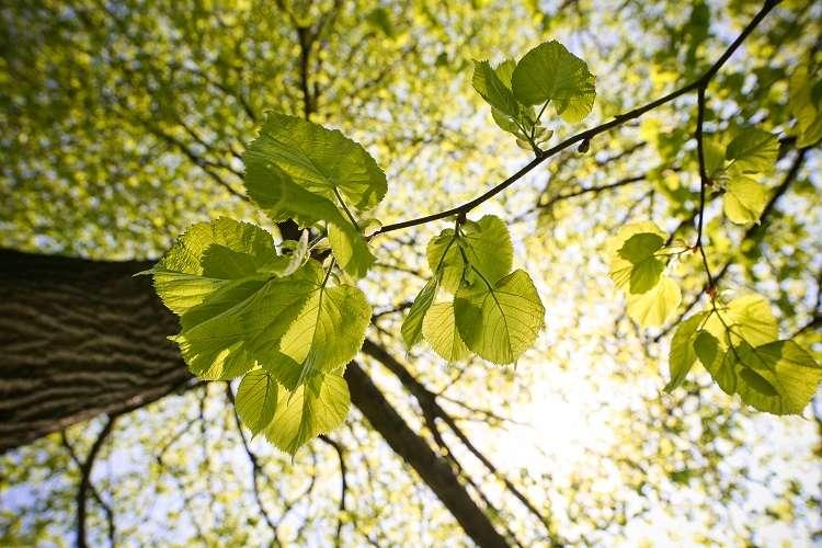 光に照らされる葉
