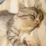 お布団の上でぐっすりお休み猫