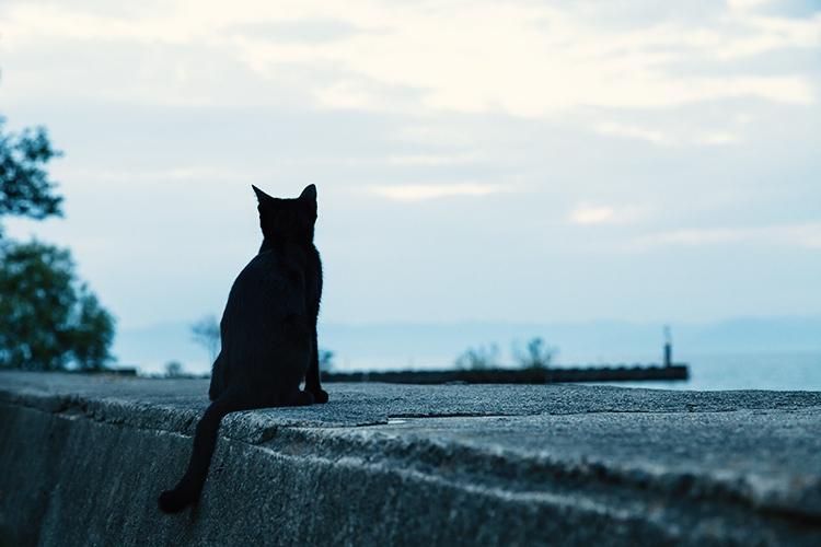 埠頭から海を見る黒猫