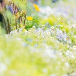 道に溢れる草花