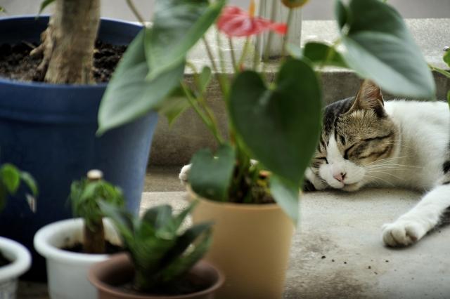 昼寝中のノラ猫