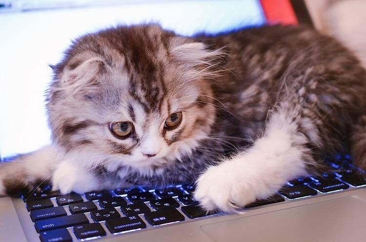キーボードを占拠する猫