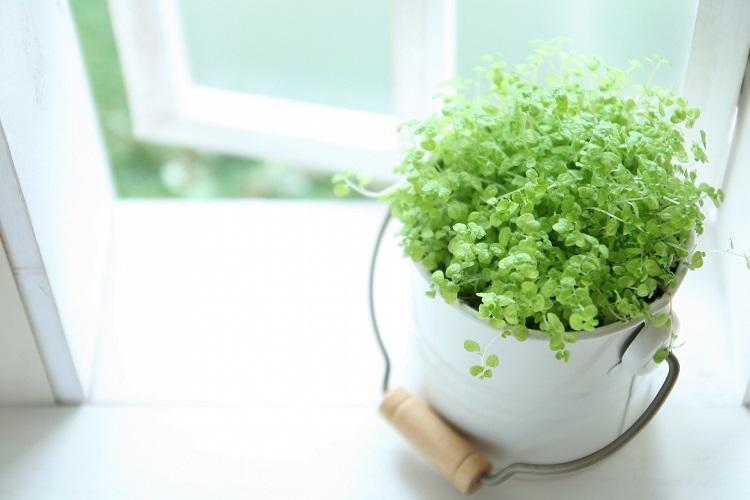 乾いた心に潤いを。枯れにくい観葉植物ランキング