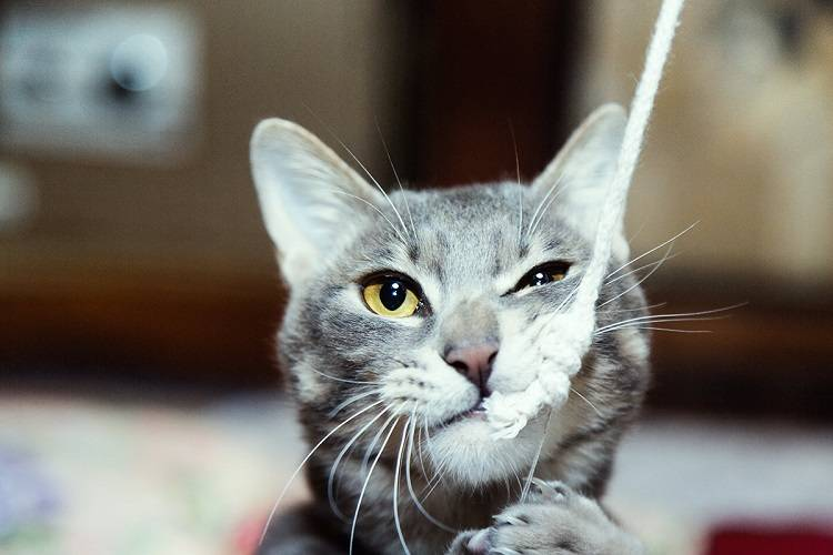 なんかもう、いろいろダルい猫