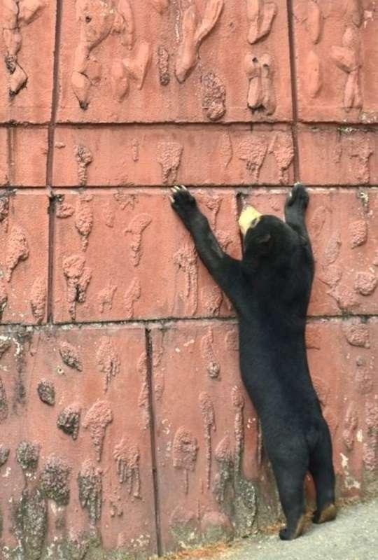 壁の向こう側に憧れるマレーグマ