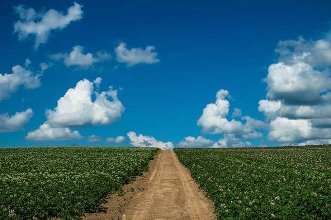 じゃがいも畑と一本道