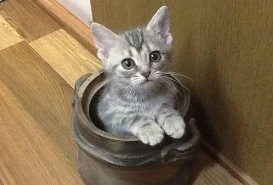 ハマってる子猫
