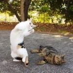 甘えてるヤツには猫パンチだ!
