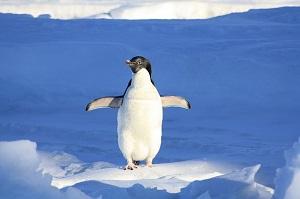 手を広げるペンギン
