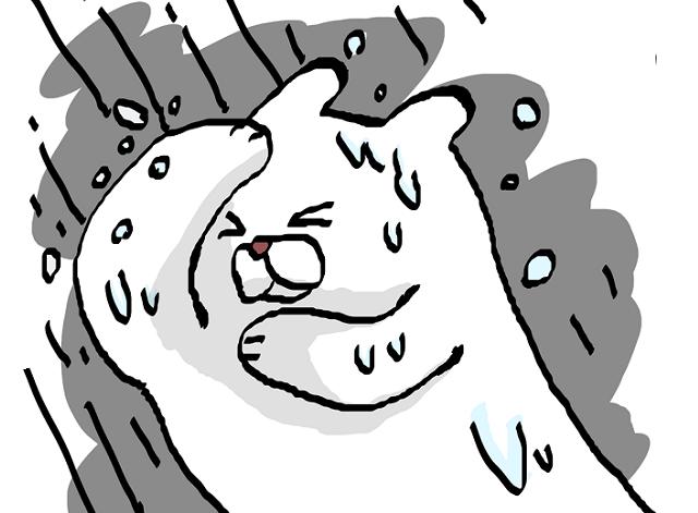 大雨に打たれるクマ