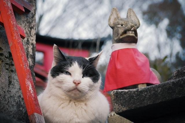 むっとする猫