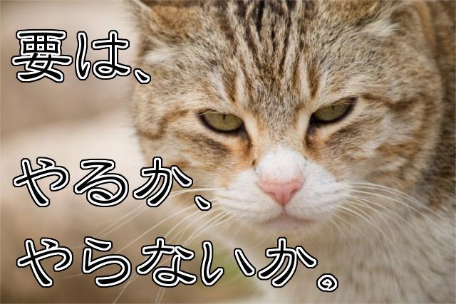 要は、やるか、やらないか猫