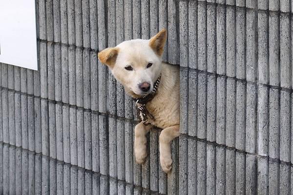 壁の隙間からのぞく犬
