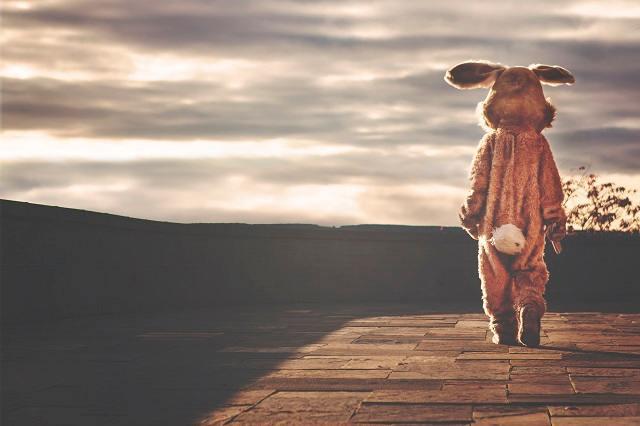 哀しみに暮れるウサギさん