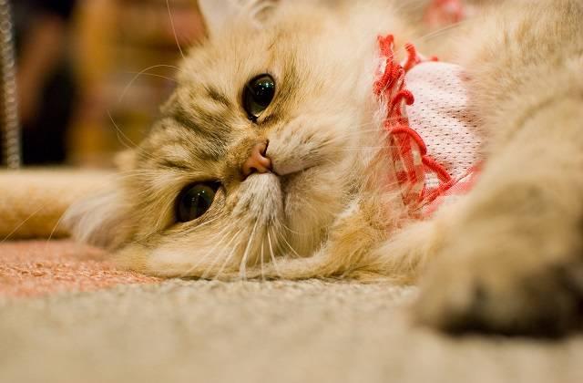 あきらめの猫さん