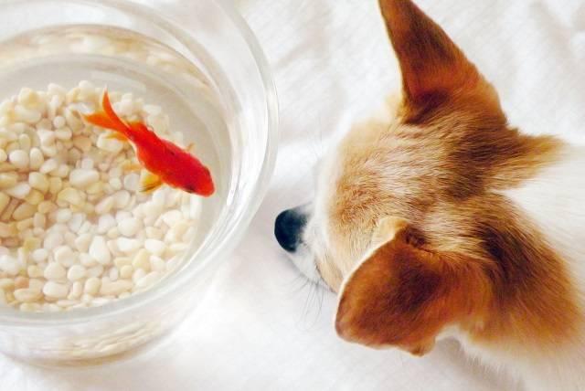 仲良し(犬と金魚)