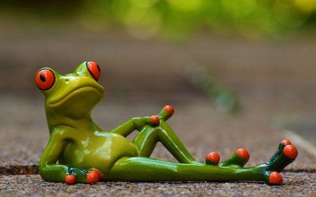 横たわるカエル