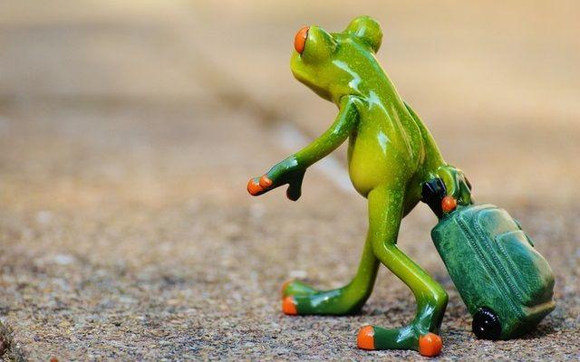 旅行に出かけるカエル