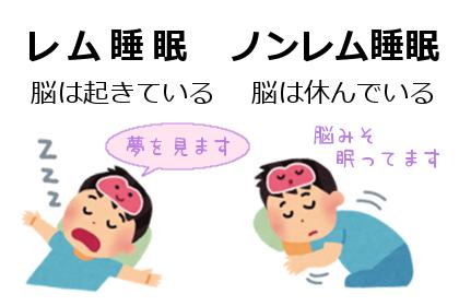 レム睡眠とノンレム睡眠
