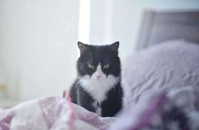 まっすぐこちらを見据える猫