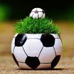 サッカーボウル(鉢植え)