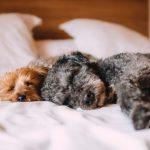 怠け心にほぼ負けた犬たち