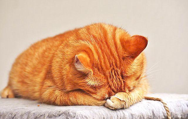 猫(落ち込み中?)