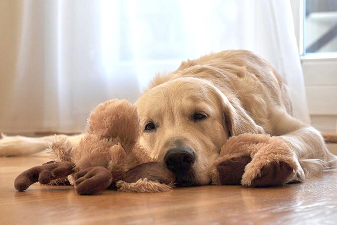 気力を失った犬