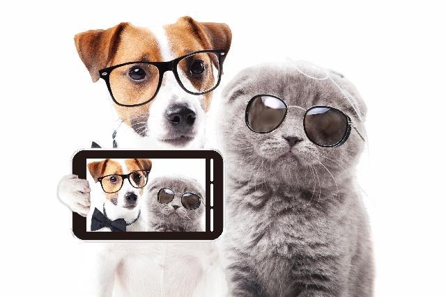 メガネをかけた犬と猫が自撮り中