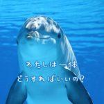 水中のイルカ「わたしは一体どうすればいいの?」
