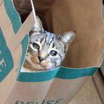 紙袋の中からこちらを覗く猫