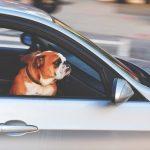 犬・イン・ザ・車