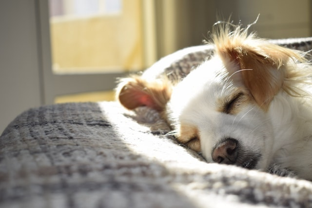日差しを浴びて夢見心地の犬