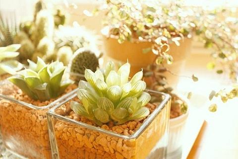 小さな植物