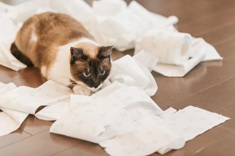 テッシュを散らかし、満足げな猫