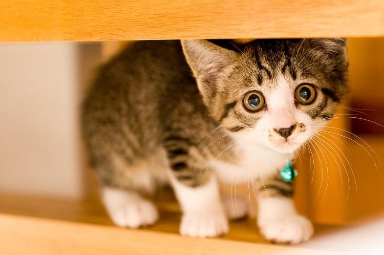 瞳がうるんだ猫(怯え)