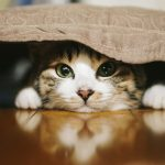 隠れてる猫