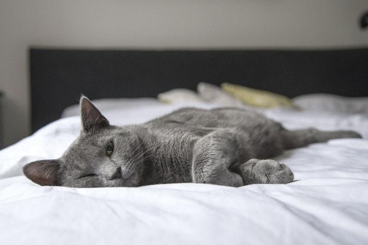 ぐったり猫「しんどい、休みたい」