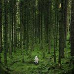 ひとり森を行く人
