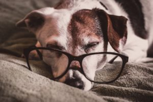 でかメガネと眠る犬