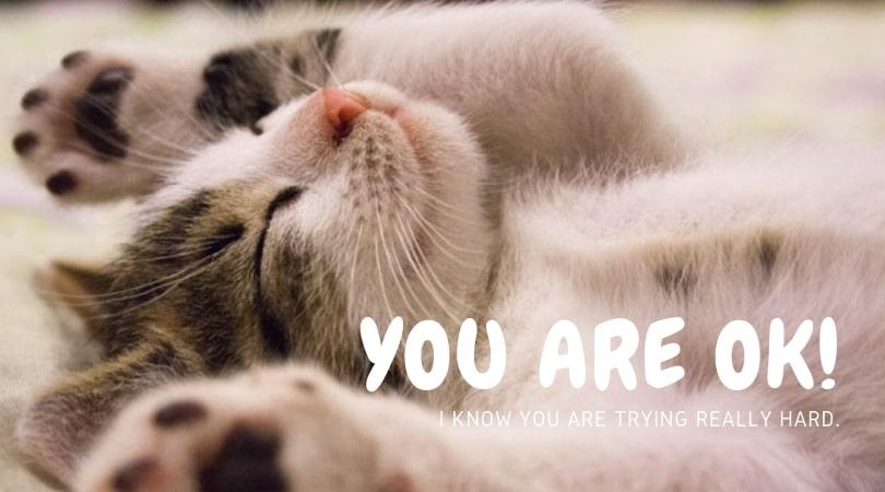 ばんざいする猫「You are OK」