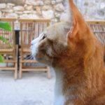 空を見上げる猫の横顔