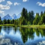 湖近くの緑の木々