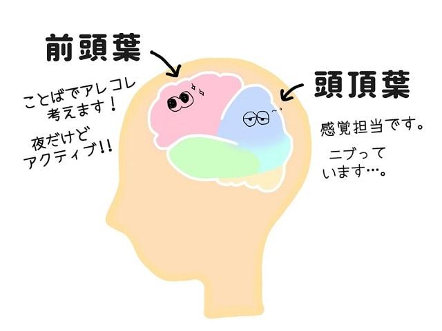 脳(前頭葉と頭頂葉)の働き