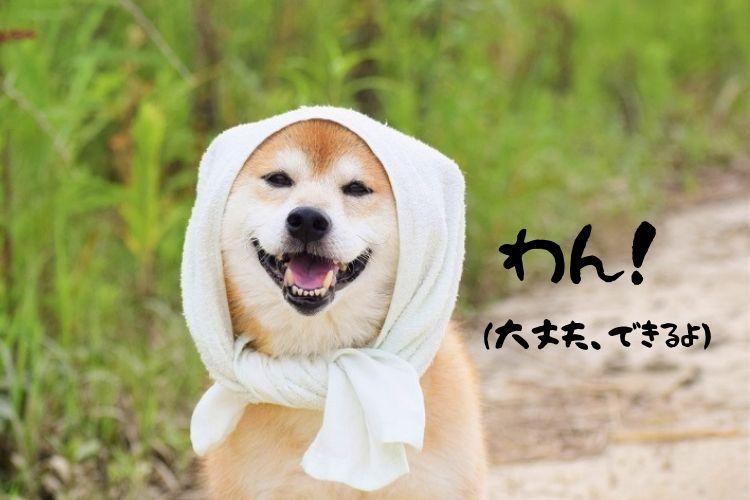 柴犬「わん!」