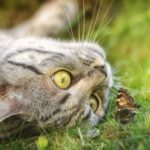 蝶か蛾か見極める猫