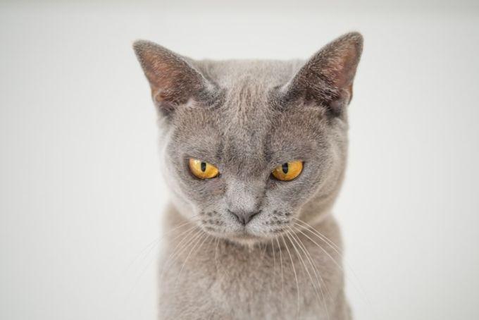 なんか怒ってるっぽい猫